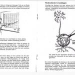1994: das erste Seminar mit der Spaßlerndenk-Methode, BEWEISE, Teil 2