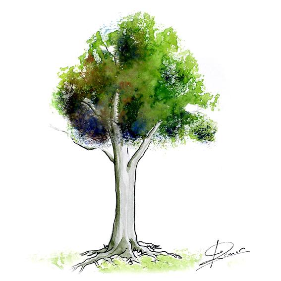 Ein Wissensgebiet ist wie ein Baum
